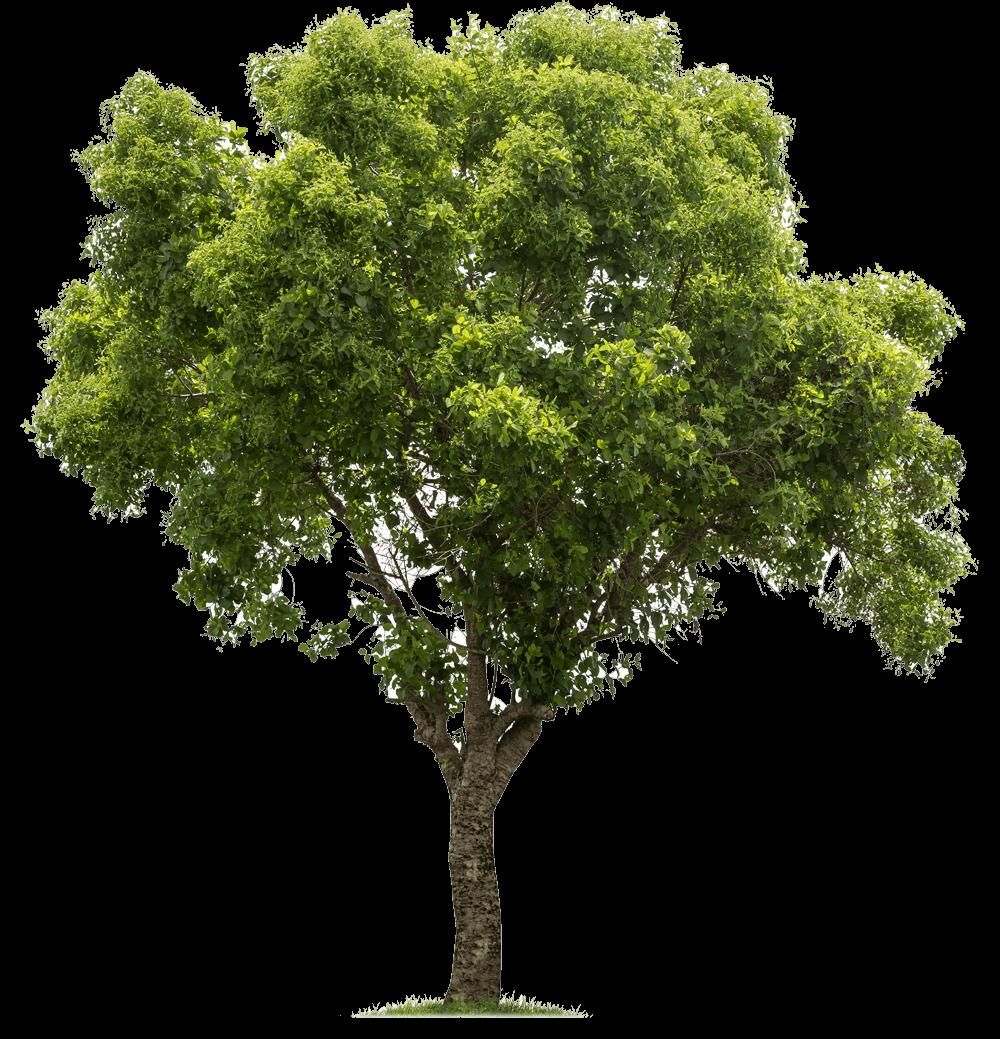 tree-vlarge